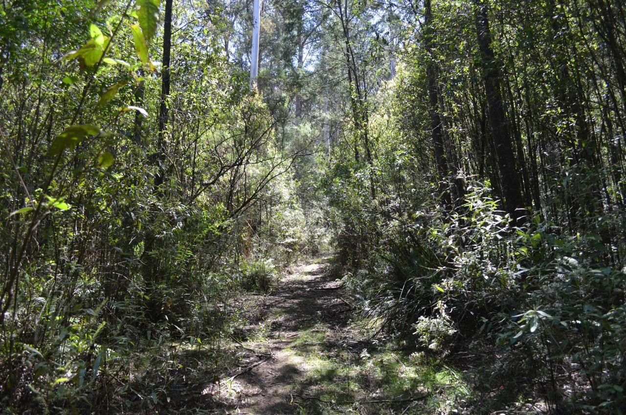 3 Amphlett Avenue, Cockatoo VIC 3781, Image 2