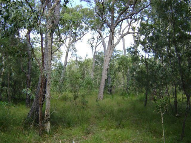 590 Pacific Drive, Deepwater QLD 4674, Image 2