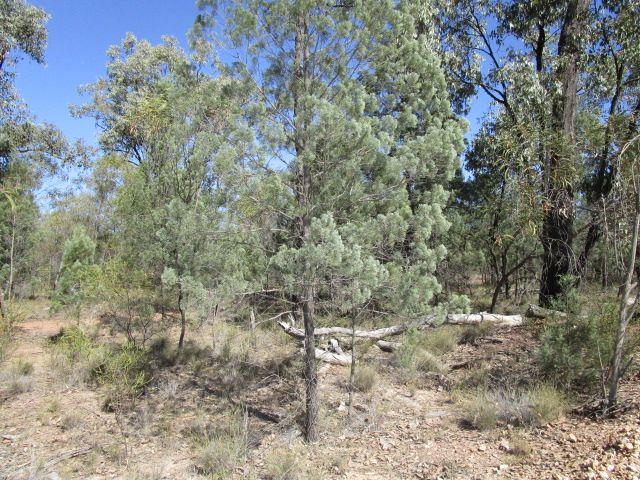 LOT 123 UPPER HUMBUG ROAD, Tara QLD 4421, Image 1
