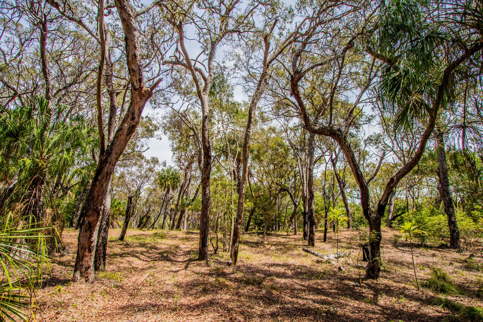 Lot 31 Bloodwood ave, Agnes Water QLD 4677, Image 0