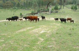 Picture of Kurrajong 886 Wearnes Road, Bundarra NSW 2359