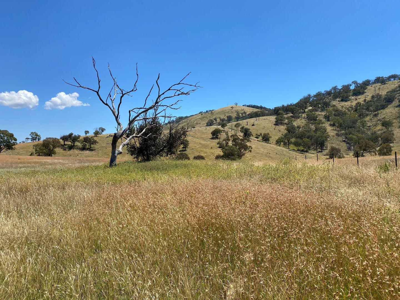 41 Campbells Creek Road, Mudgee NSW 2850, Image 1