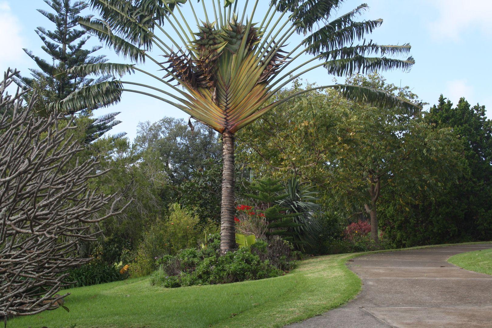 Stockyard Road, Norfolk Island NSW 2899, Image 1