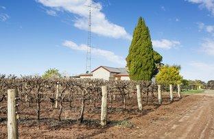 Picture of 29 DeFontenay Road, Barmera SA 5345