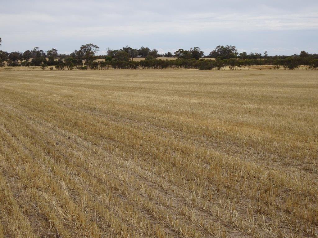 Lot 650 Yillimining Road, Narrogin Valley WA 6312, Image 2