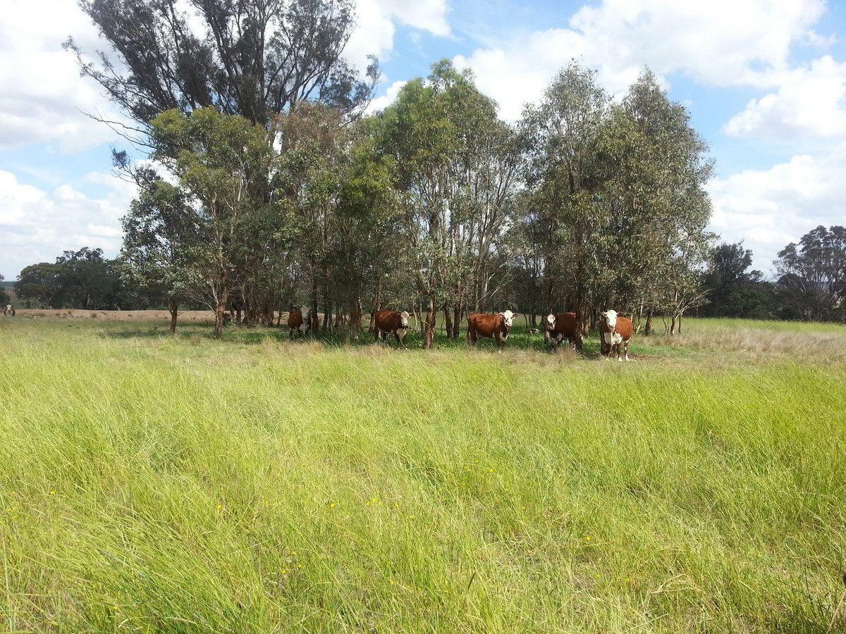 1716 Castlereagh Highway, Gulgong NSW 2852, Image 1