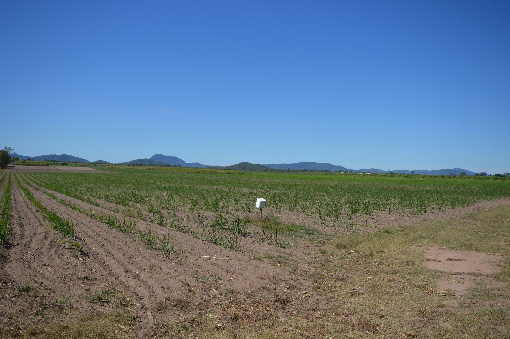 205 Dunwold-Cattle Creek Road, Mirani QLD 4754, Image 1