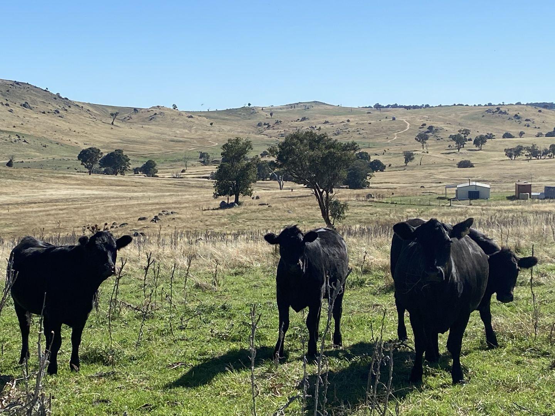 5025 Boorowa Road, Narrawa NSW 2583, Image 1
