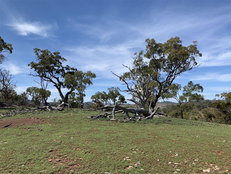 Palarang Road, Merriangaah NSW 2632, Image 2