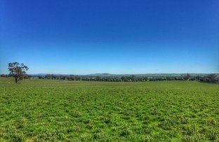 Harefield Pistachios Aerodrome Lane, Wagga Wagga NSW 2650