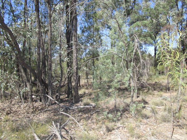 LOT 123 UPPER HUMBUG ROAD, Tara QLD 4421, Image 2