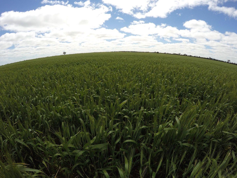 Borambola NSW 2650, Image 0