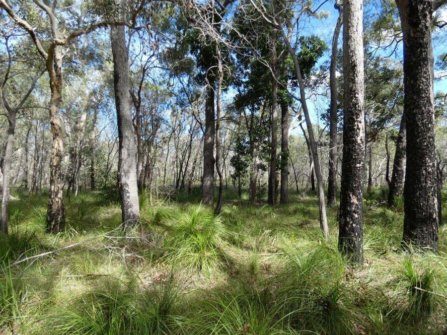 83 Deepwater Road, Deepwater QLD 4674, Image 0