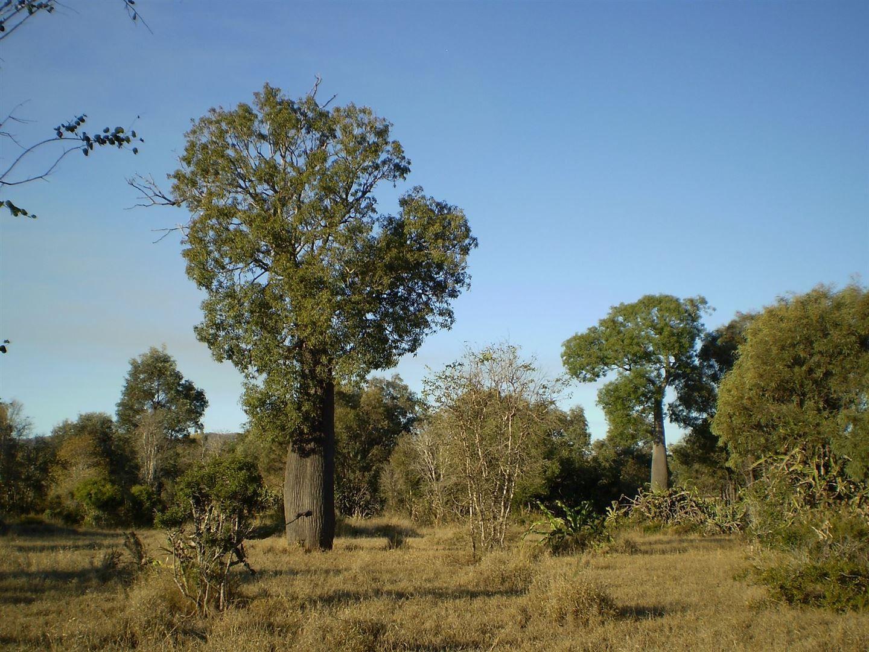 362 Riverslea Road, Gogango QLD 4702, Image 0