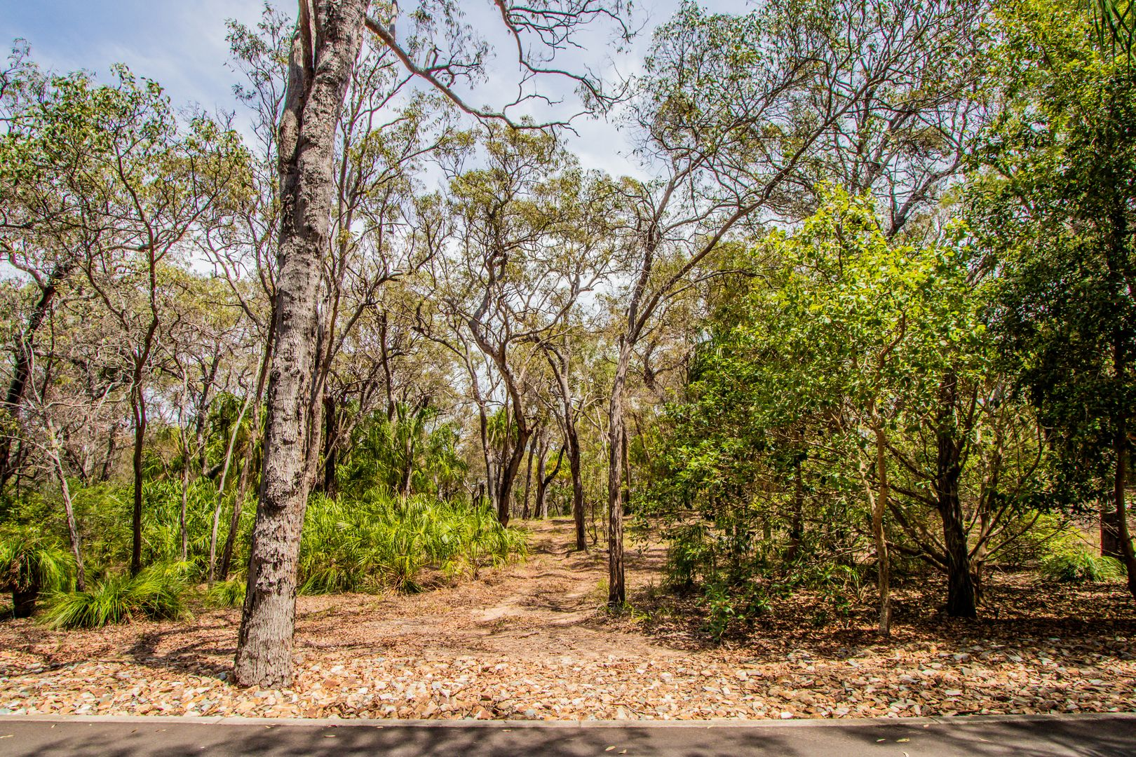 Lot 31 Bloodwood ave, Agnes Water QLD 4677, Image 2