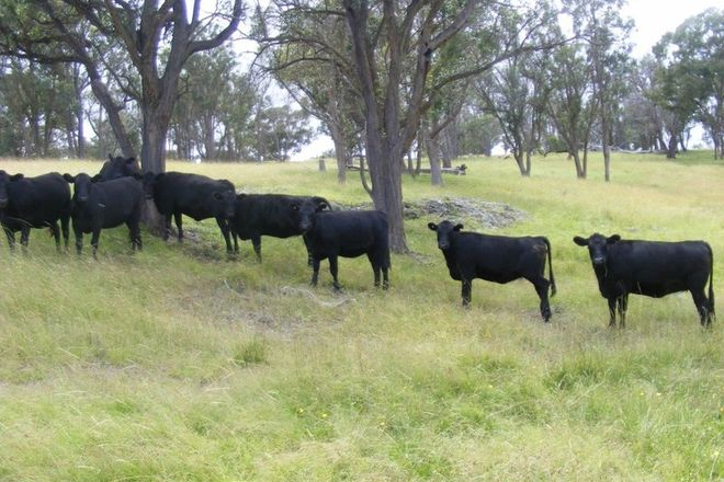 Picture of Eastleigh/277 Ten Mile Road, DEEPWATER NSW 2371