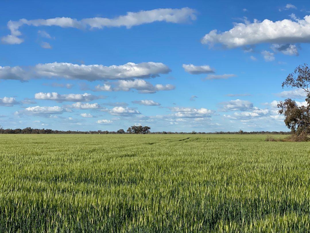Swanley, Moree NSW 2400, Image 1