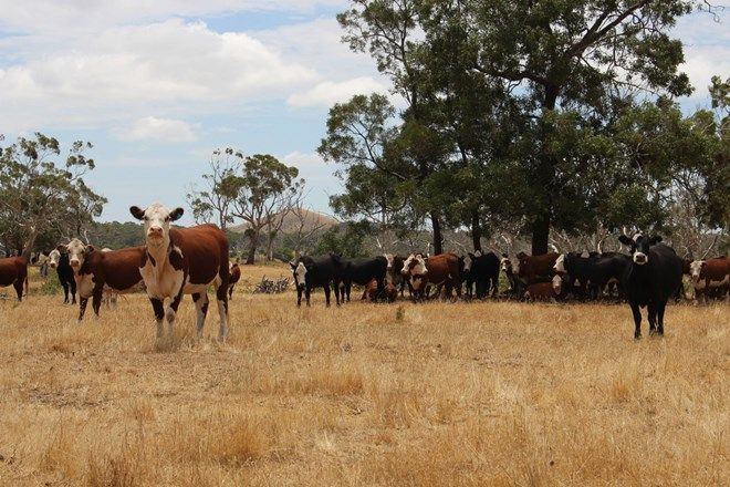 Picture of Cobden-Stonyford Road, STONYFORD VIC 3260