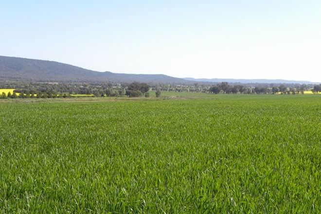 Picture of Lot 3 Tallarook Road and North Woodlands, COWRA NSW 2794