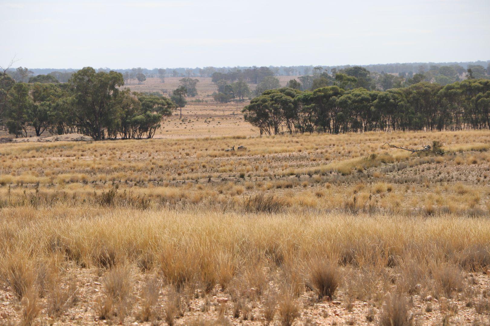 468 EMU VALLEY LANE, Tullamore NSW 2874, Image 2
