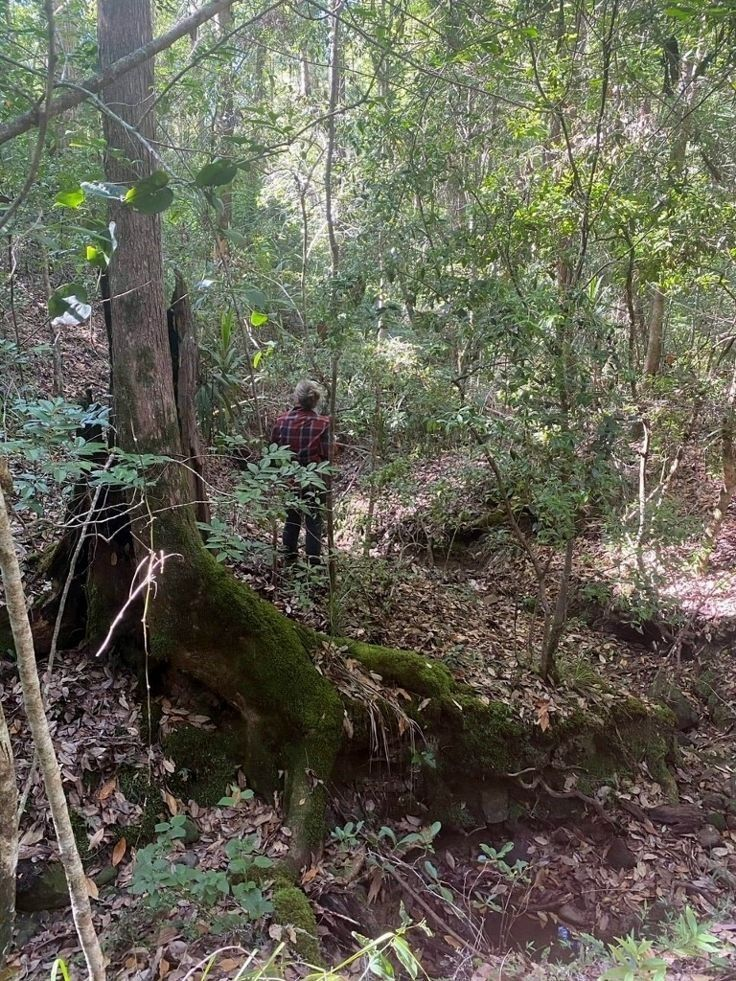 74 Stringybark Lane - Toonumbar, Kyogle NSW 2474, Image 1