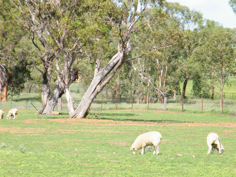 2039 Coonabarabran Road, Caroona NSW 2343, Image 2