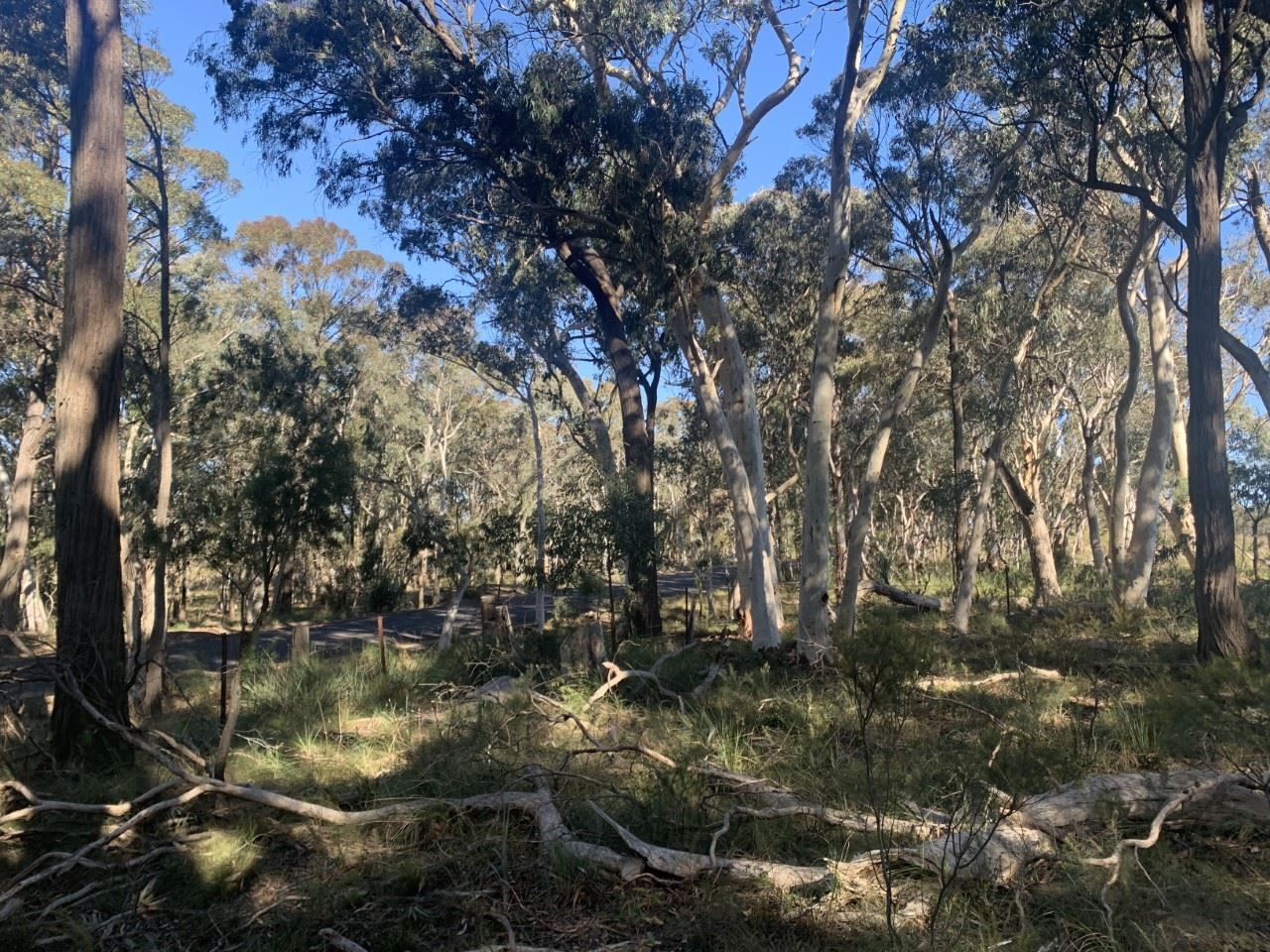 809 Aarons Pass Road, Carcalgong, Mudgee NSW 2850, Image 0