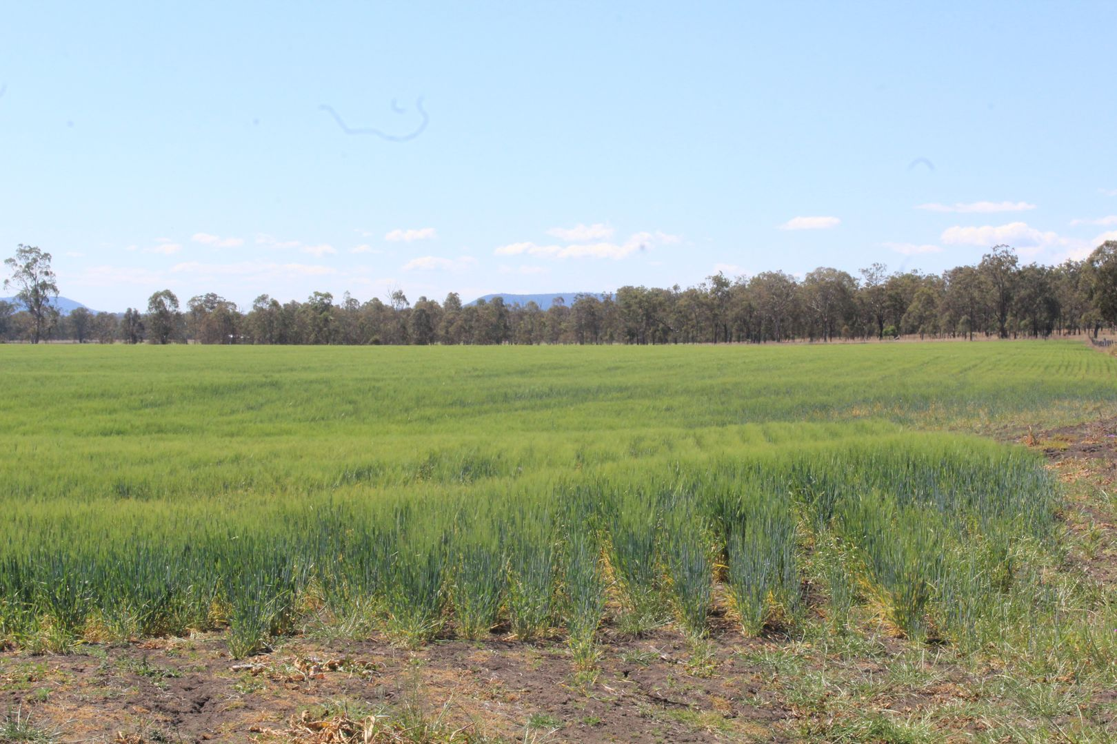 Lot/14 Armbruster Road, Junabee QLD 4370, Image 1