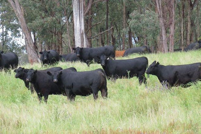 Picture of GLEN BARRA Glen Barra Road, WATSONS CREEK NSW 2355