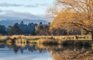Picture of Lot 3 VALLEY DRIVE, Halls Gap VIC 3381