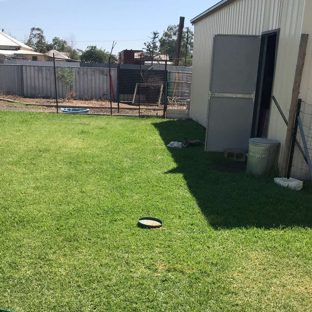 21 Townsend Street, Coonamble NSW 2829, Image 2