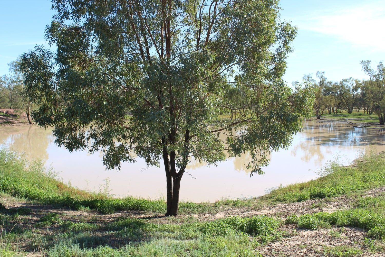 """""""Glenwood South"""", Mungindi NSW 2406, Image 2"""