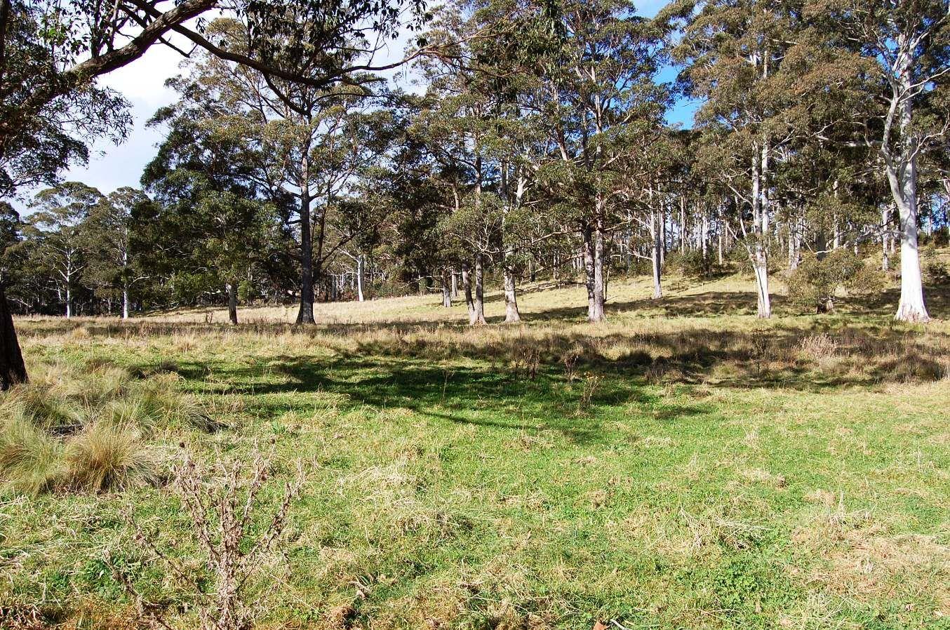 Cunnawarra Trail, Ebor NSW 2453, Image 0