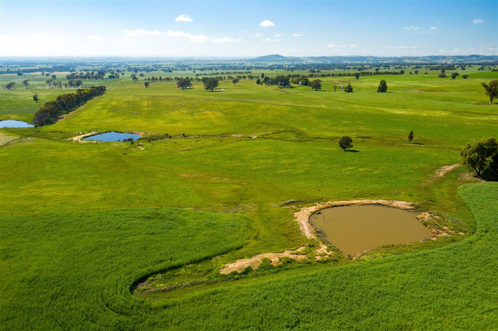 Pachmarhi Wrigleys Road, Big Springs via, Wagga Wagga NSW 2650, Image 1