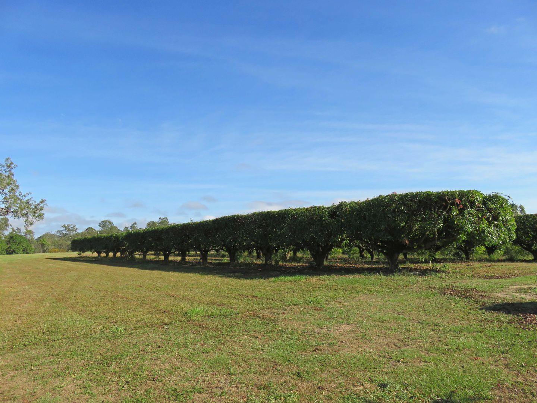 Paddys Green QLD 4880, Image 1