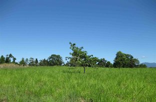 Picture of Silky Oak QLD 4854