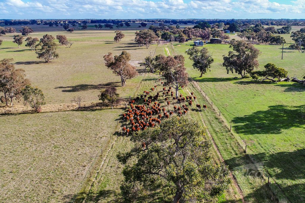 1591 Lucindale Road, Spence SA 5271, Image 0