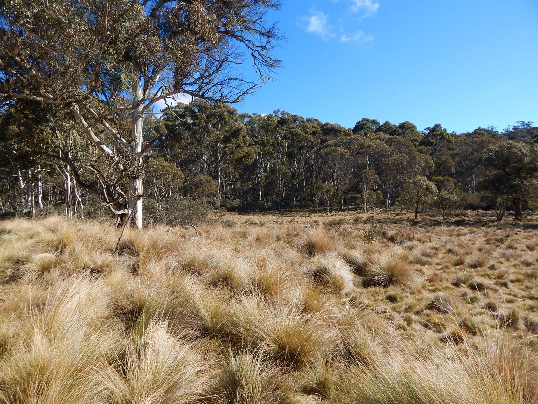 Lot 48 Tea Tree Swamp, Bredbo NSW 2626, Image 0