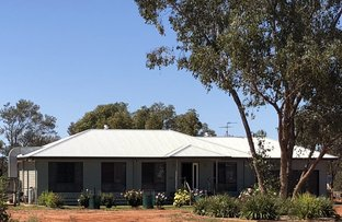 Picture of 90 Caviar Drive, Charleville QLD 4470