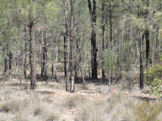 LOT 107 FORESTRY RD WERANGA, Tara QLD 4421, Image 1