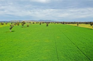 Picture of 'Arthurs' Taylors Road, Morven NSW 2660