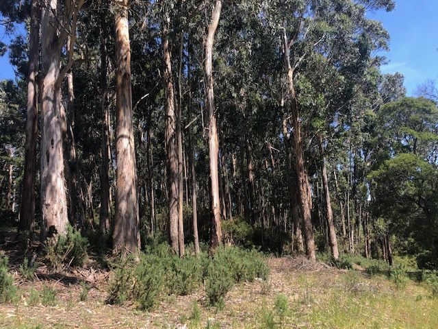 Lots 4 & 5 Thurgoods Lane, Barrys Reef VIC 3458, Image 1