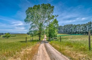 Picture of 931 Moe Rawson Road, Tanjil South VIC 3825