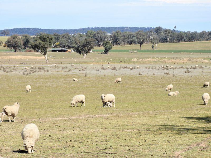 125 Grounds Road, Murringo NSW 2586, Image 2