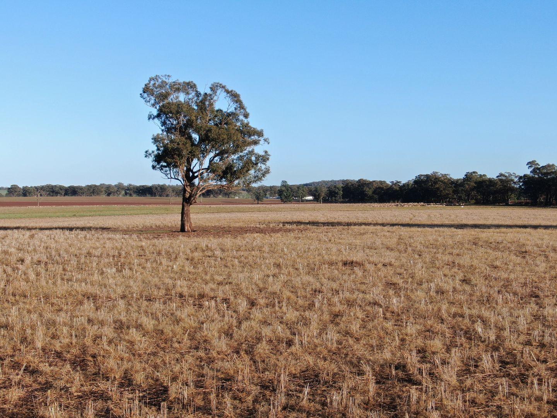 124 Taylors Road, Gidginbung NSW 2666, Image 2