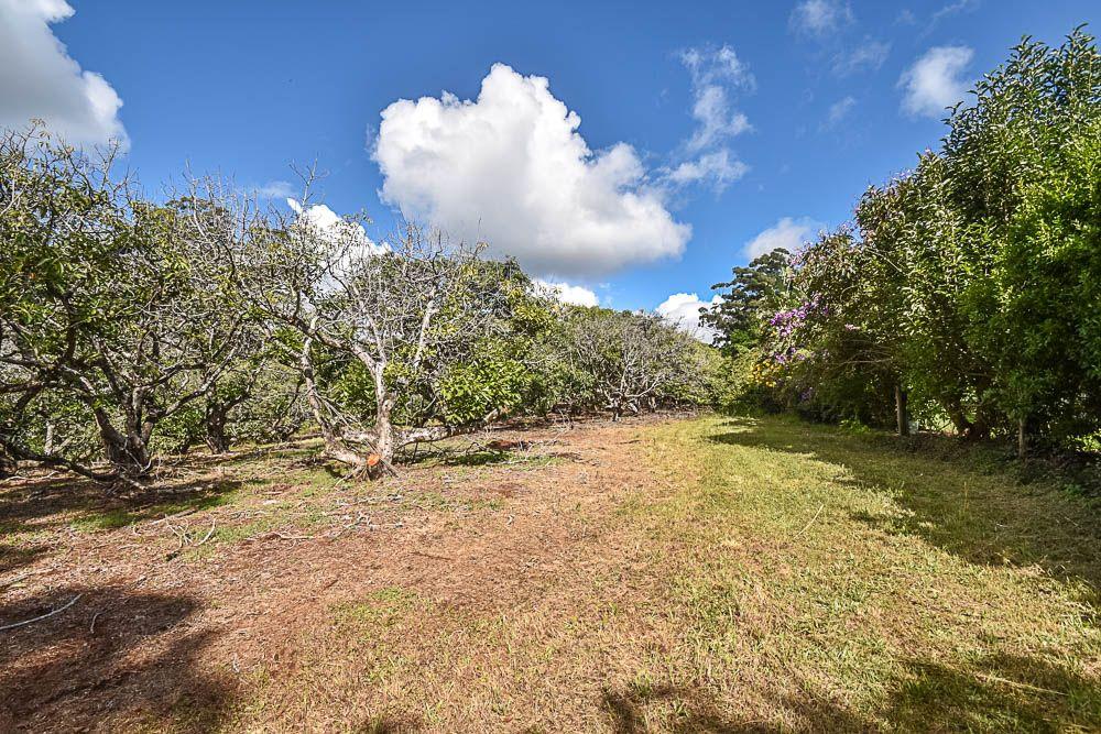153 Alpine Terrace, Tamborine Mountain QLD 4272, Image 0