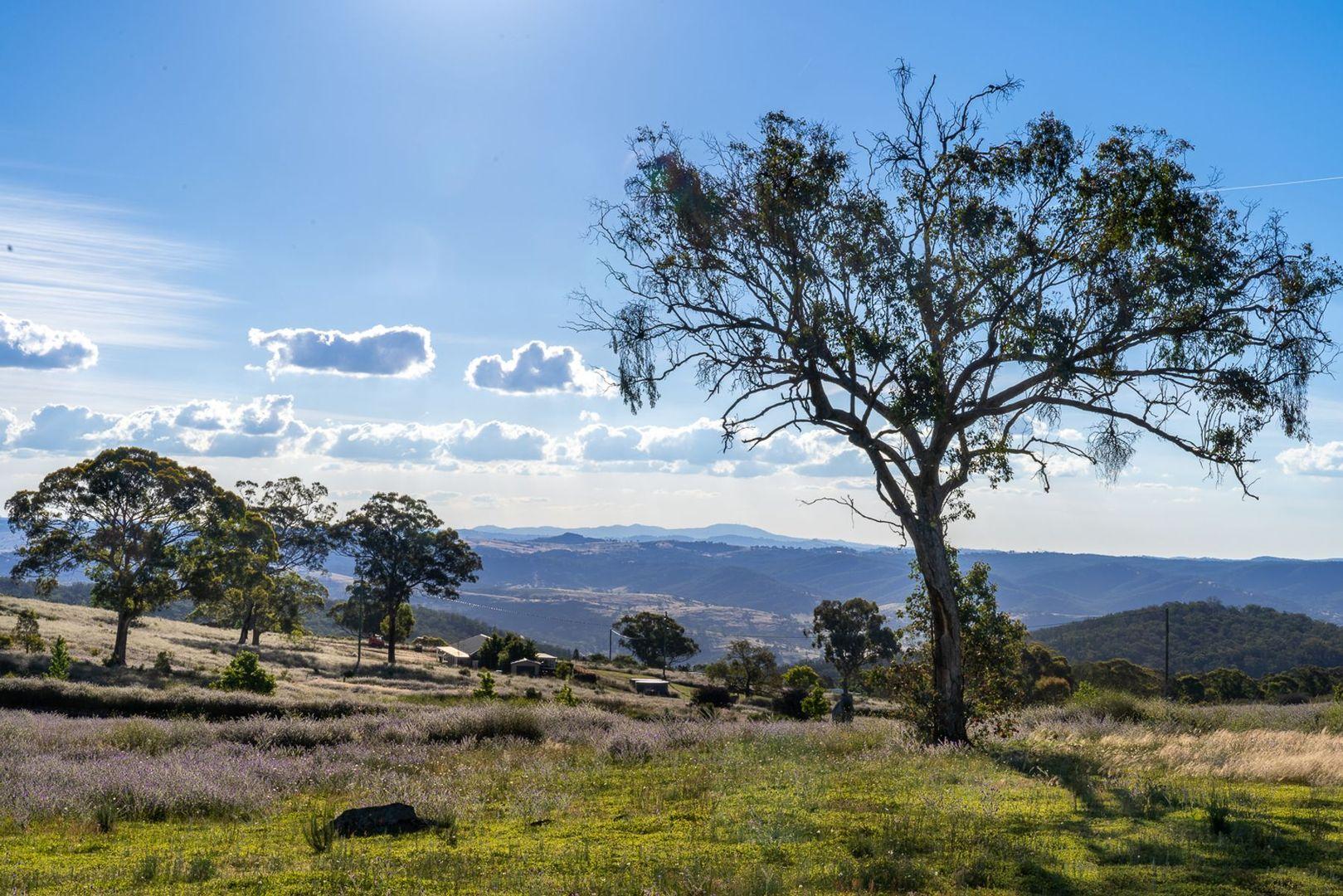 185 Peregrine Road, Billywillinga NSW 2795, Image 0
