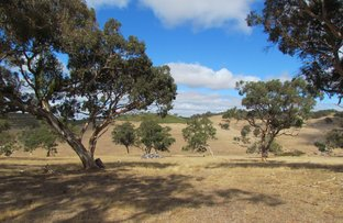 Picture of Lot 1 Blackmore Road, Strathalbyn SA 5255