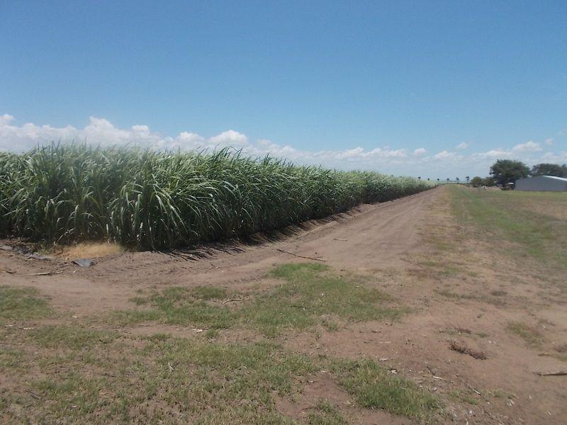 31 Klondyke Road, Ayr QLD 4807, Image 0