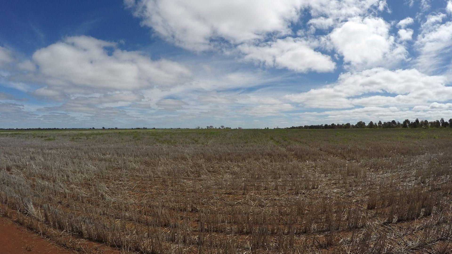 Borambola NSW 2650, Image 1